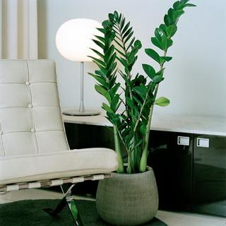 Комнатные растения как бизнес идея
