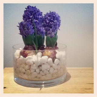 hyacinth3_новый размер