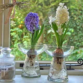 preview_hyacinth_bulb_vase_новый размер