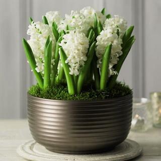white-hyacinth-bowl_новый размер