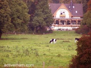 бюргерпарк,бремен,коровы