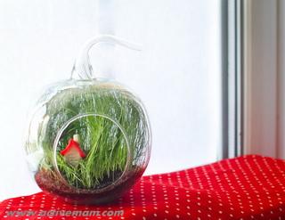 флорариум с травой