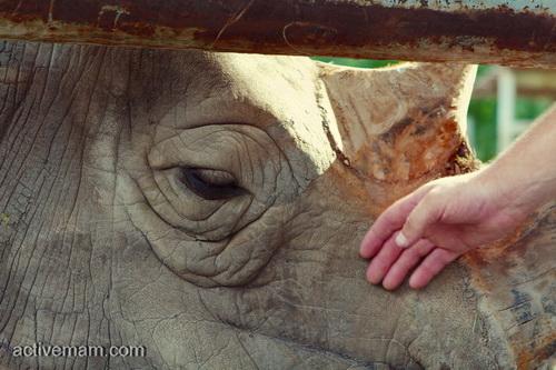 белый носорог ростов на дону