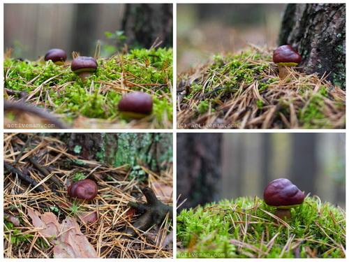поделка гриб из желудя каштана
