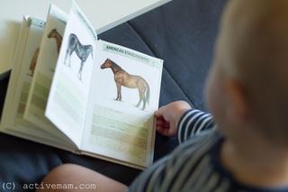 читаем с ребенком на английском