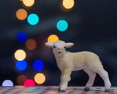 овца 2015