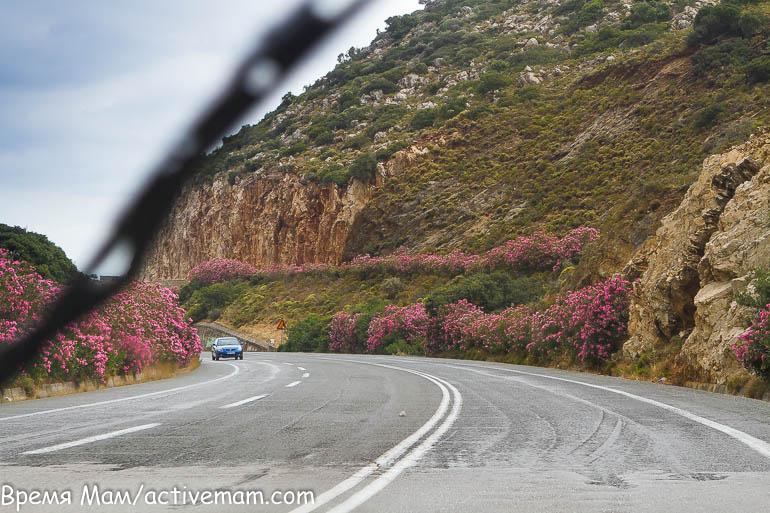 цветущие олеандры